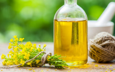 The Dangers of Canola Oil